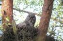 Birding in Belarus: