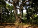Bishangari Forest| Birding tour Ethiopia 2014