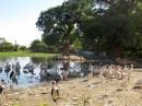 Lake Ziway| Birding tour Ethiopia 2014