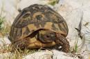 Wildlife Holiday Croatia Slovenia