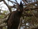 Birding tour Ethiopia 2015