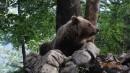 Wildlife Holiday in Slovenia