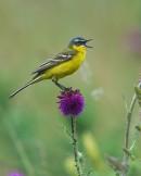 Bird photo tours Hungary