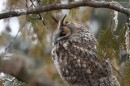 Bird photo hide - winter