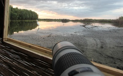 Waterside photo hide | Bird photography tours Hungary
