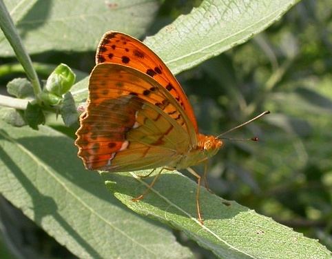 | Butterfly holidays Hungary